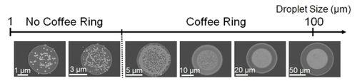 Coffee-Ring-UCLA-News-Release2-prv