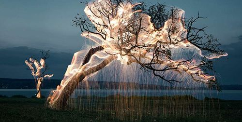 Amazing-long-exposure-photos-make-light-look-like-cobwebs-on-trees