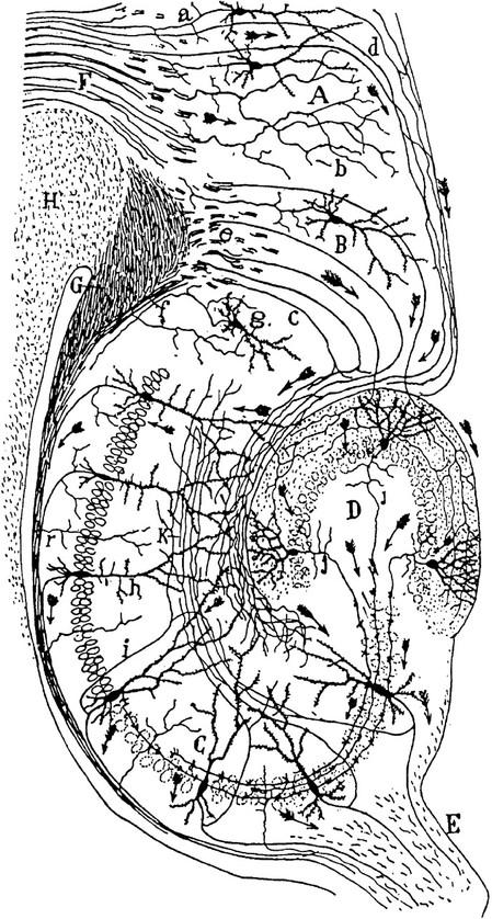 Cajalhippocampus_2