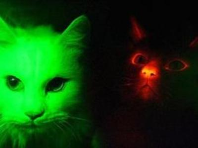 Glowcats_270x202