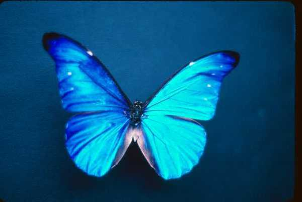 http://twistedphysics.typepad.com/cocktail_party_physics/images/butterfly.jpg